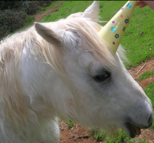 horse in a party hat, pretending to be a unicorn